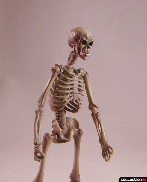 skeletonstroll